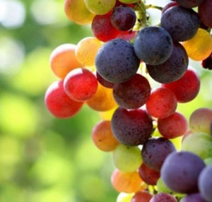 sagra-dell'uva1